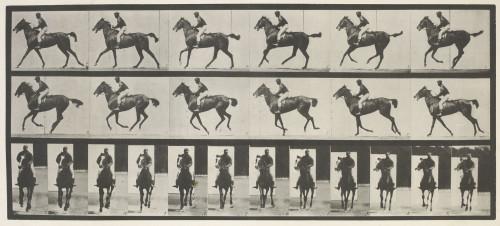 12_Muybridge.jpg