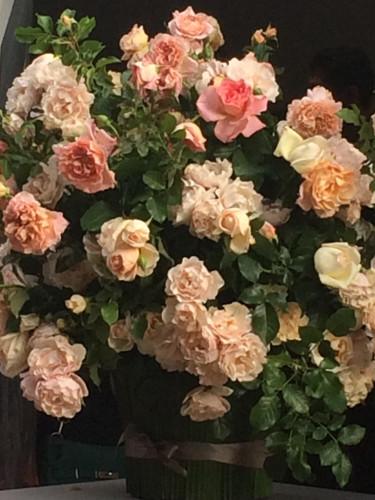Bouquet Rose Jardin des Tuileries.JPG