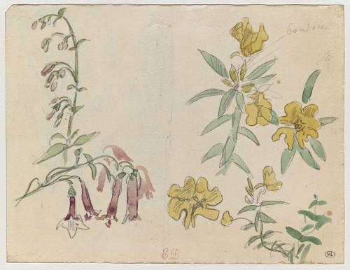 9_Eugène Delacroix, Etude de  eurs avec une branche de fuchsias, crayon noir et aquarelle sur papier vergé,