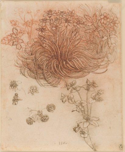 13. Léonard de Vinci, Étoile de Bethléem, Anémone des bois, Euphorbe Petite Éclaire. Royal Collection Trust / © Her Majesty Queen Elizabeth II 2019
